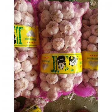 CHINA NORMAL WHITE GARLIC WITH MESHBAG PACKAGE TO BAHRAIN