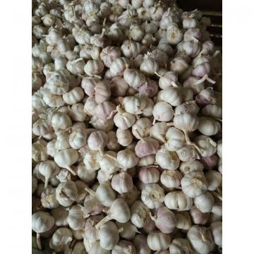 NORMAL WHITE GARLIC WITH MESHBAG PACKAGE TO BAHRAIN