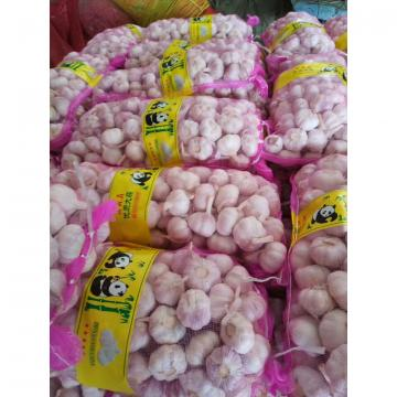 2017 NEW CROP NORMAL WHITE GARLIC WITH MESHBAG PACKAGE TO BAHRAIN