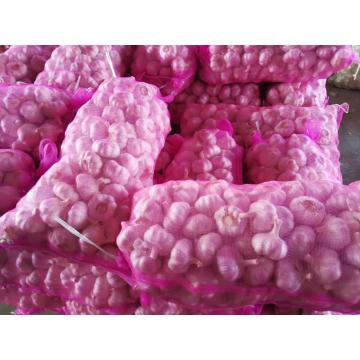 2017 NEW CROP GARLIC FROM FACTORY