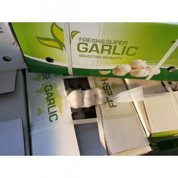 JINXIANG NEW CROP GARLIC TO COSTA RICA MARKET