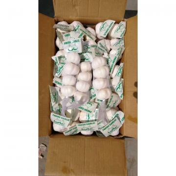 JINXIANG NEW CROP GARLIC TO IRAQ MARKET FROM FACTORY