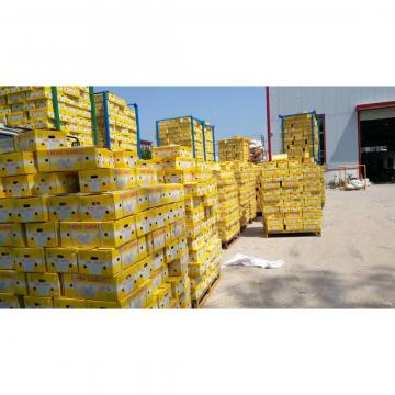 CHINA NEW CROP PURE WHITE GARLIC TO IRAQ MARKET