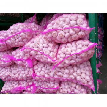 BIG MESHBAG PACKAGE NEW CROP GARLIC WITH KOREAN STANDARD
