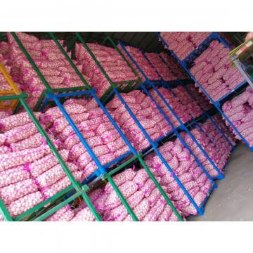 NEW CROP GARLIC WITH KOREAN STANDARD FROM CHINA