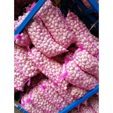 2017 NEW CROP GARLIC WITH KOREAN STANDARD FROM CHINA
