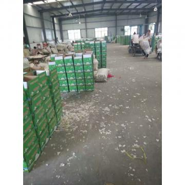 CHINA NEW CROP GARLIC TO HONDURAS FROM FACTORY