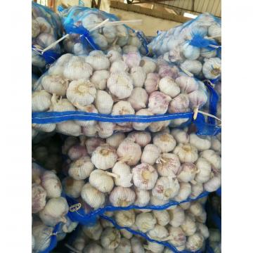 CHINA NEW CROP GARLIC WITH MESHBAG PACKAGE TO DR MARKET