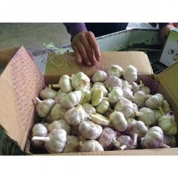 2017 NEW CROP CHINA GARLIC WITH CARTON PACKAGE TO SANTOS,BRAZIL