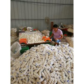 PURE WHITE GARLIC WITH 200G PACKAGE TO TURKEY FROM CHINA