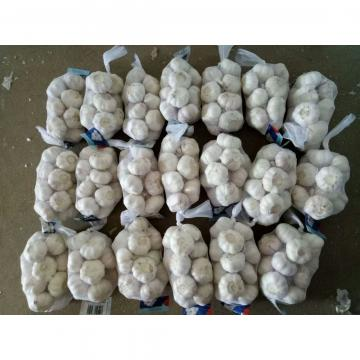 NORMAL WHITE GARLIC WITH 250G PACKAGE TO TUNIS FROM CHINA