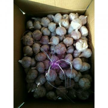 NORMAL WHITE GARLIC WITH 10KG LOOSE CARTON PACKAGE FOR COLOMBIA MARKET