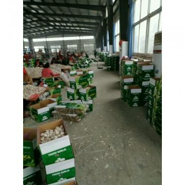 10KG LOOSE CARTON PACKAGE FOR COLOMBIA MARKET