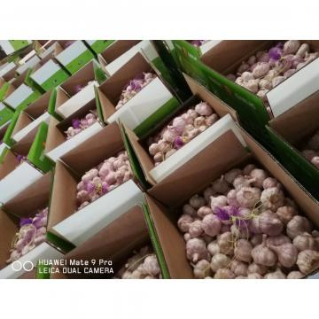 10KG LOOSE CARTON PACKAGE GARLIC FOR SENEGAL MARKET FROM CHINA FACTORY