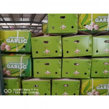 NEW CROP GARLIC WITH 10KG LOOSE CARTON PACKAGE FOR SENEGAL MARKET