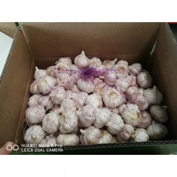 NORMAL WHITE GARLIC WITH 10KG LOOSE CARTON PACKAGE FOR SENEGAL MARKET