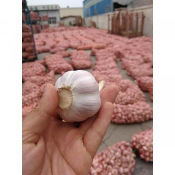 2018 New Crop chinese fresh garlic