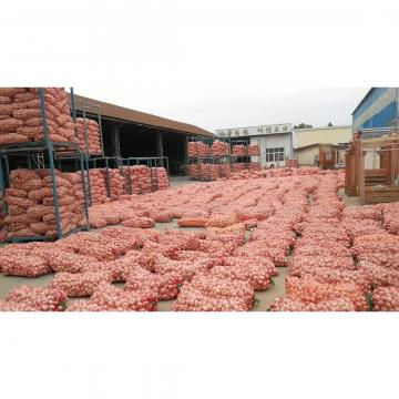 2018 new crop garlic from china