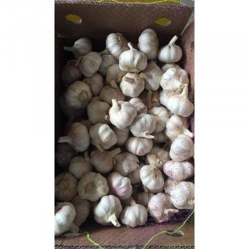 2018 New Crop fresh garlic with 10KG Loose Carton package from china factory