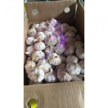 2018 New Crop fresh garlic with 10KG Loose Carton package to Brazil