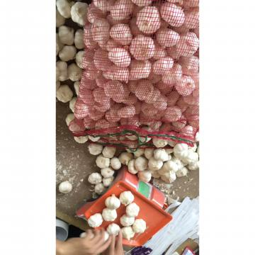 2018 New Crop pure white garlic with 10KG Loose Carton package to EU Market
