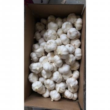 2018 New Crop pure white garlic to EU Market