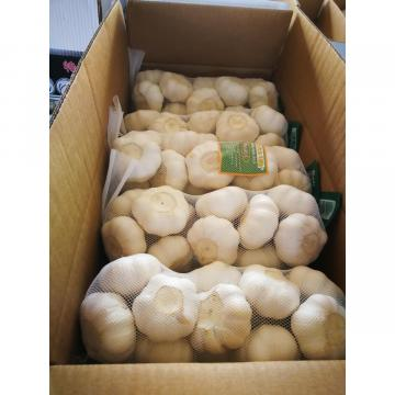 2018 pure white garlic to Japan Market with 500g/bag