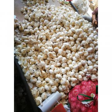 2018 pure white garlic to Japan Market with 3pc/bag