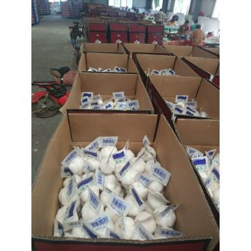 2018 china pure white garlic with tube & carton package to Turkey