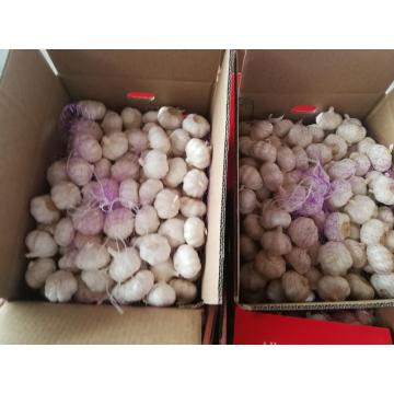 pure white garlic with 10KG loose package to Angola Market