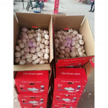 2018 china pure white garlic with 10KG loose package to Angola Market