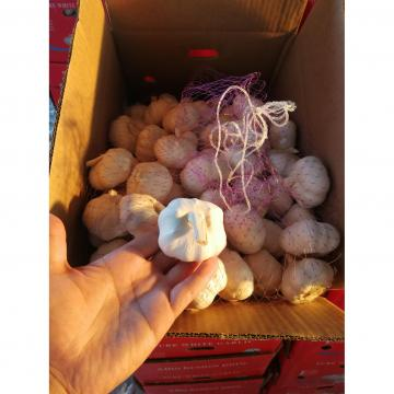 2018 pure white garlic with 10KG loose package to Angola Market