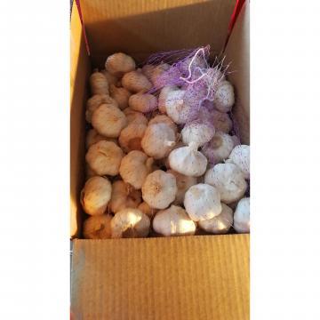 2018 china pure white garlic to Angola Market