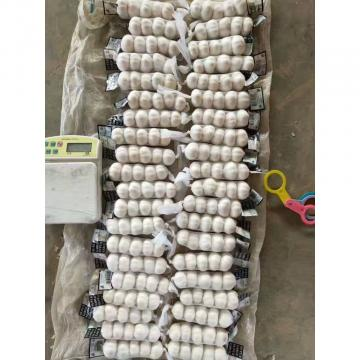 2018 China pure white garlic with tube package to Kuwait Market