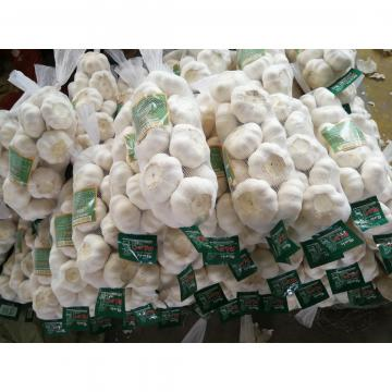 2018 china pure white garlic with 500g*20 bags carton package to Japan Market