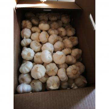 2018 china pure white garlic with carton package to Nicaragua Market