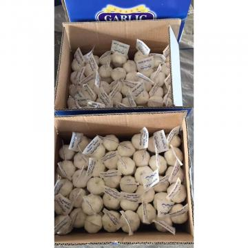 2018 china pure white garlic with tube package to Iraq Market