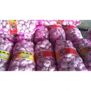 china new crop garlic with 10kg Meshbag package to TT (Trinidad and Tobago )Market