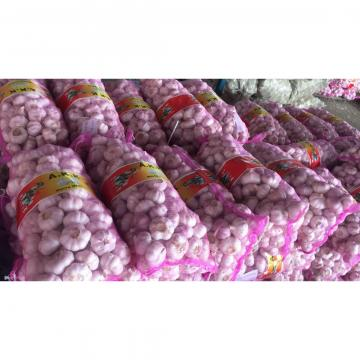 2018 new crop garlic with 10kg Meshbag package to TT (Trinidad and Tobago )Market