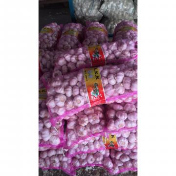 2018 china new crop garlic with 10kg Meshbag package to TT (Trinidad and Tobago )Market