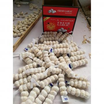 china pure white garlic with tube & carton package to Midddle East Market