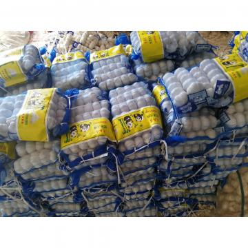 2018 pure white garlic with meshbag package to Turkey Market