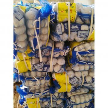 china pure white garlic with meshbag package to Turkey Market