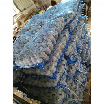 China Normal white garlic with meshbag& carton package to Russia Market