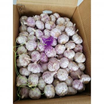 2018 china Normal white garlic to Russia Market