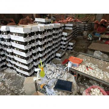 2018 pure white garlic with meshbag& carton package to Iraq Market
