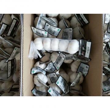 china pure white garlic with meshbag& carton package to Iraq Market