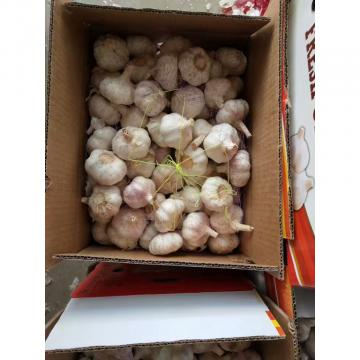 Normal white garlic with 10KG Loose carton package to Brazil Market