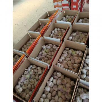 China 10KG Loose carton package Normal white garlic to Brazil Market