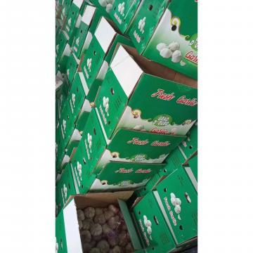 10KG Loose carton package China Normal white garlic to Brazil Market